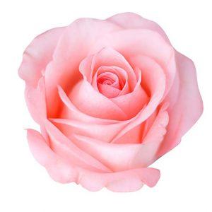 Rosae, Rosarum...Rosé - QDVino